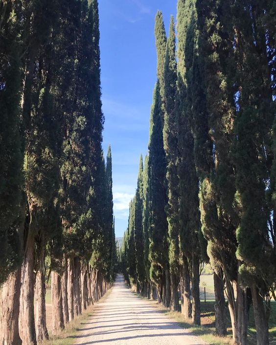 Villa Medicea Di Lilliano Tuscany Wedding Tree Alley