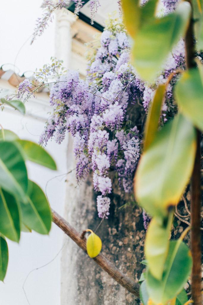 magnolias-on-silk-portugal-quinta-wisteria